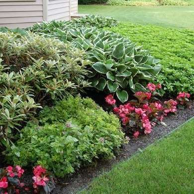 Foundation planting front yard landscaping and yard for Front yard landscaping plants and shrubs