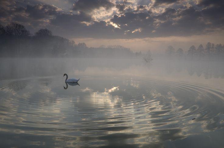 Svítání s labutí