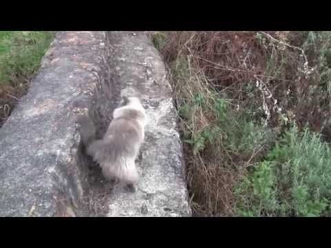 Bubbles the ragdoll cat Guide to a good weekend