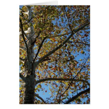 Sycamore tree in the fall against a blue sky card - blue gifts style giftidea diy cyo