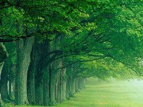 Ağacın dizaynındaki üstünlük - Harunyahya.org