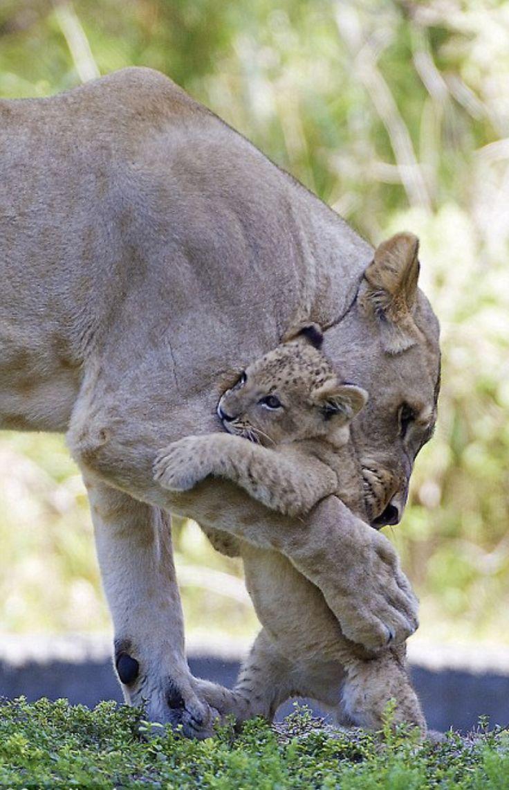 трогательные фото животных с детенышами понять шип