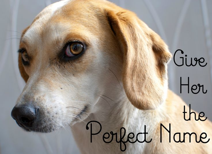 100 Cute Female Dog Names and Meanings