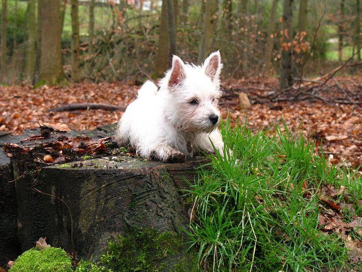 A Dog Named Christmas With Cbd