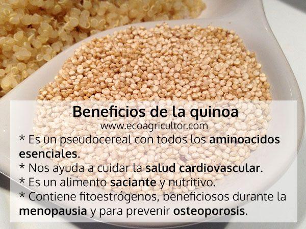 Quinoa O Quinua Propiedades Y Beneficios Quinoa Beneficios