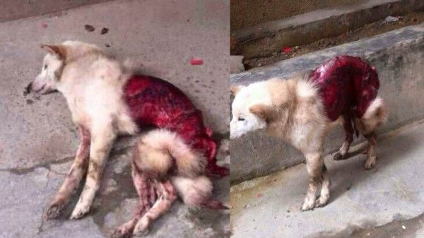This dog was skinned alive I was heart broken why do people what dog fur if you like real animal fur you are sick #stop animal abuse and skinning animals