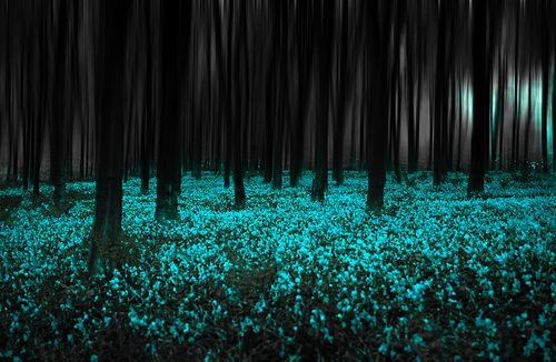 Blue Forest, United Kingdom  photo by chrisfiel