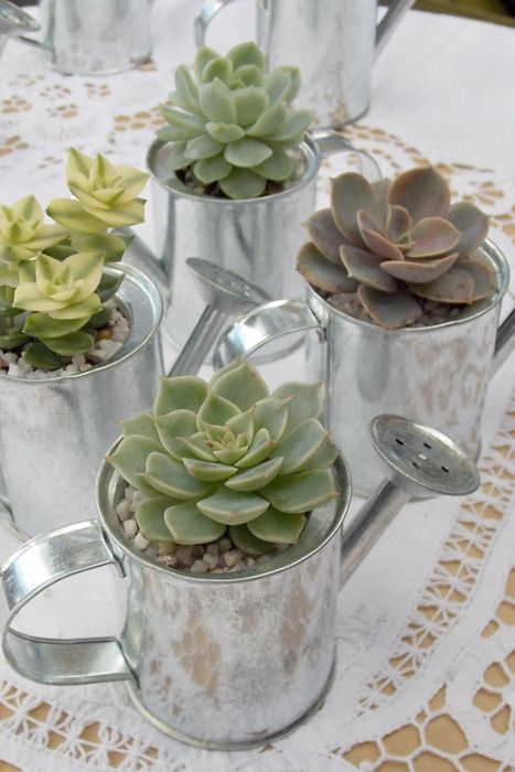 Succulents in mini watering cans make perfect spring favors. Photo source:out side impact  #succulents #wedding favors #springweddings