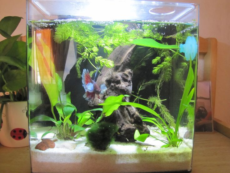 Aqueon evolve 4 aquarium fishtank planted tank betta for Aqueon fish tank