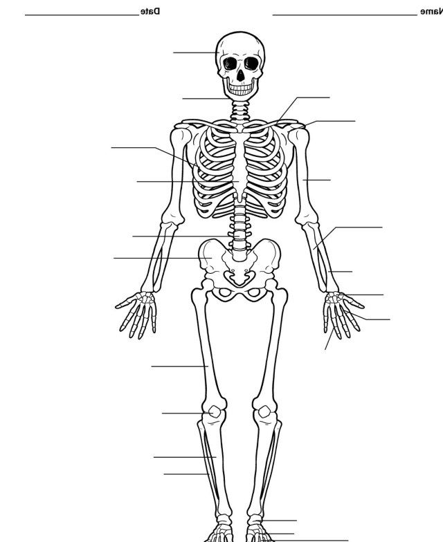 Human Skeleton Diagram With Labels Human Skeleton Diagram With