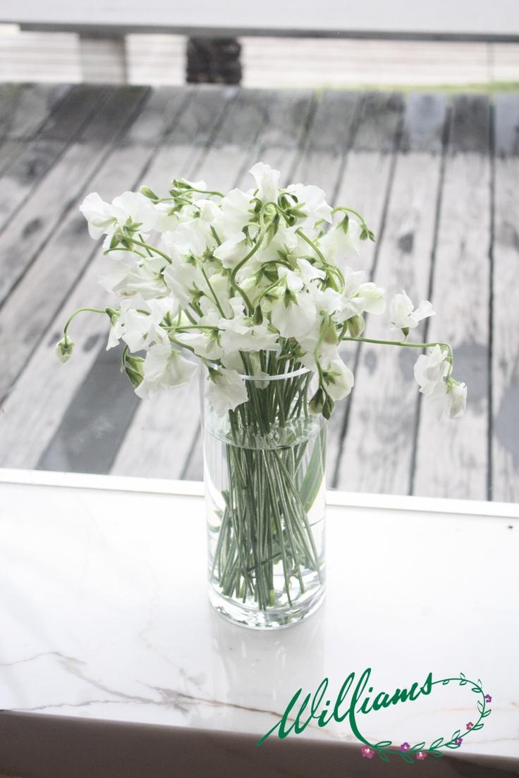 White Sweet Pea.