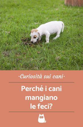 Li Il Cane Mangia La Cacca Querciacb