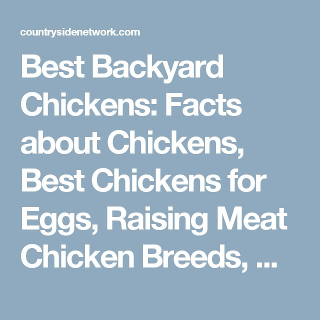 Best Backyard Chickens: Facts about Chickens, Best Chickens for Eggs, Raising Meat Chicken Breeds, What to Feed Chickens & Easy Chicken Coops to Build - Countryside Network