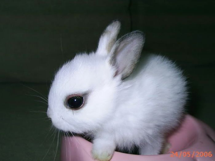 123 best images about Bunnies on Pinterest  Rabbit cages Cute