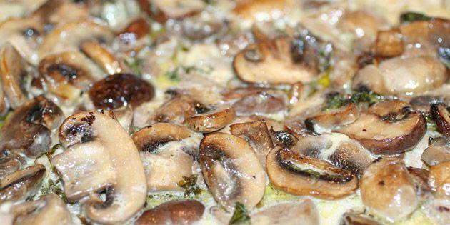 Mørbrad i champignonsauce