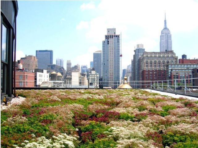 Jardins verticais e telhados verdes como compensação ambiental | vivagreen