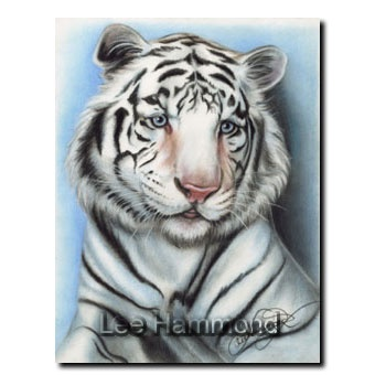 32 best artist lee hammond images on pinterest drawing art white tiger 11x14 colored pencil by lee hammond fandeluxe Choice Image