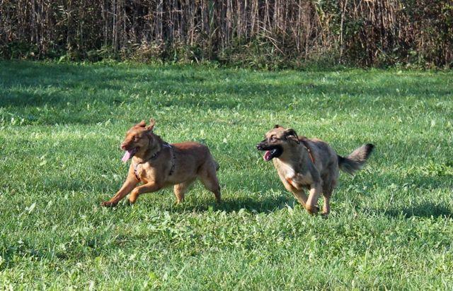 Sorelle Asia e Pepita si divertono.  / Sisters Asia and Pepita, enjoying the run!