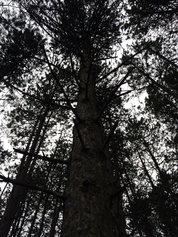 the abundance of trees