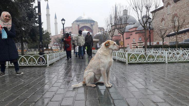 #istanbul #sultanahmet #ayasofya #السلطان_احمد #اياصوفيا #اسطنبول