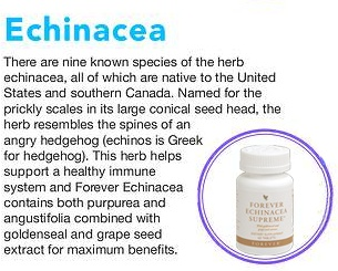 There are 9 known species of the herb Echinacea, all of which are native to the USA & southern Canada. Named for the prickly in its large conical seed head, the herb resembles the spines of an angry hedgehog (Enchinos, is Greek for Hedgehog). This herb helps support the immune system & Forver Enchinacea contains both purpurea & augustifolia, combined with goldenseal & grapeseed extract for maximum benefits. £17.33 www.foreversupplements.info #immunesystem #flu #colds #supplements #viruses