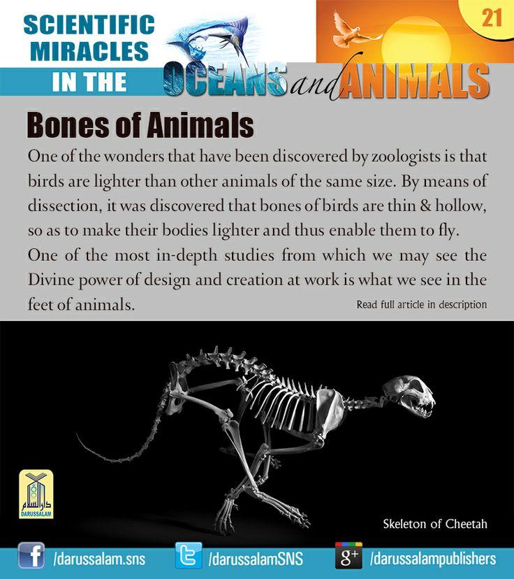 Wonder science essay 2010