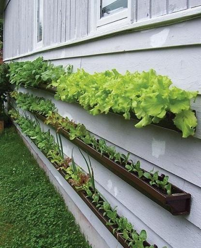 Вертикальные грядки для пряных трав на стене дома