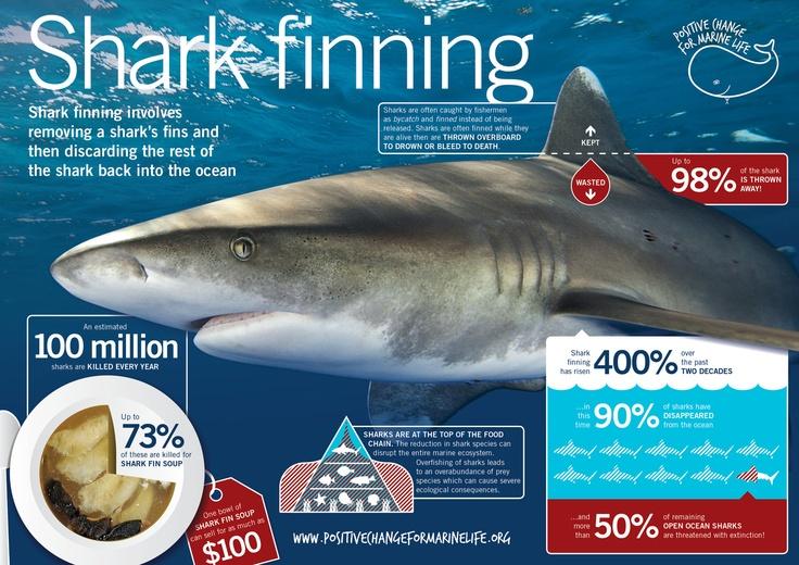 Shark fin option trade