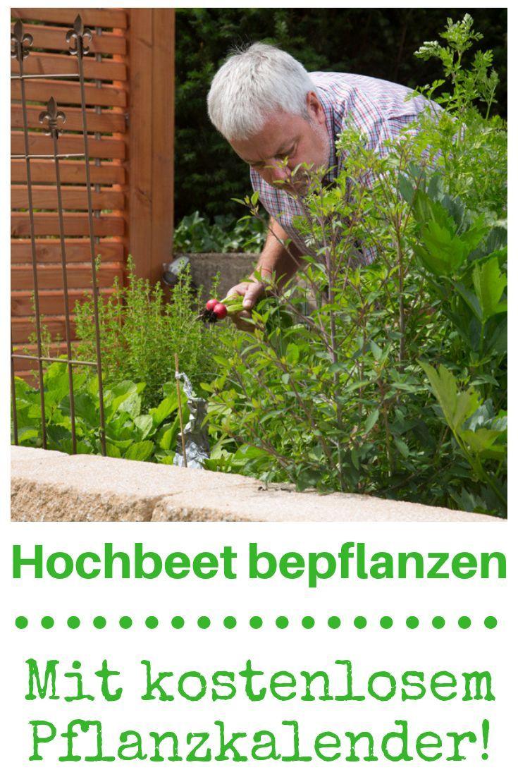 Hochbeet Bepflanzen Garden Makeover Garden Plants Vegetable Vegetable Garden Design