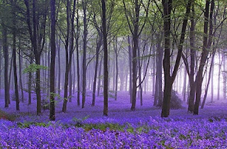 'there is a Silent eloquence in every wild #bluebell' #AnneBronte. Time to pause awhile as we #ridecolorfully and quietly through English woods and dells