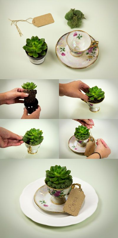 DIY: succulent vintage teacup wedding favor idea If I can get him to do an Alice in Wonderland-esque theme... -repinned from Los Angeles wedding minister https://OfficiantGuy.com #losangeles #orangecounty #california #weddings