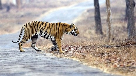 Pricetag set for tiger conservation  By Richard Black Environment correspondent, BBC News