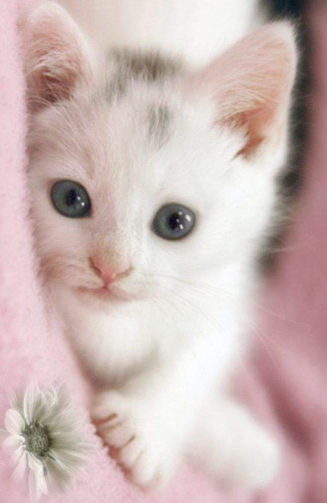 Now That S Sweet Cute Cats Pictures Kittens Cutest Cute Cats Pretty Cats