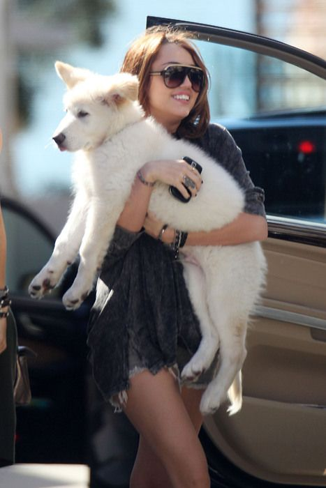 i need a medium sized dog so that i can show those chihuahua toting girls how it should be