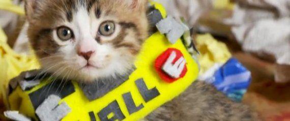 'Wall-E' Gets Even Cuter With A Robot Kitten