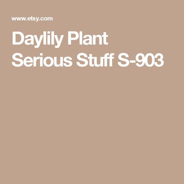 Daylily Plant  Serious Stuff S-903