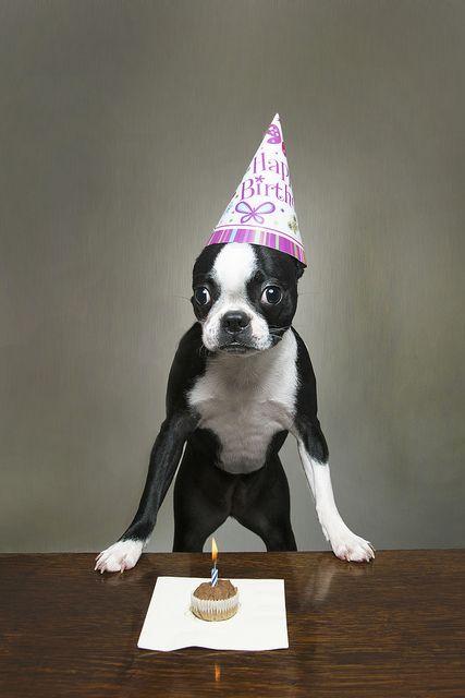 Happy Birthday Lula!, via Flickr.