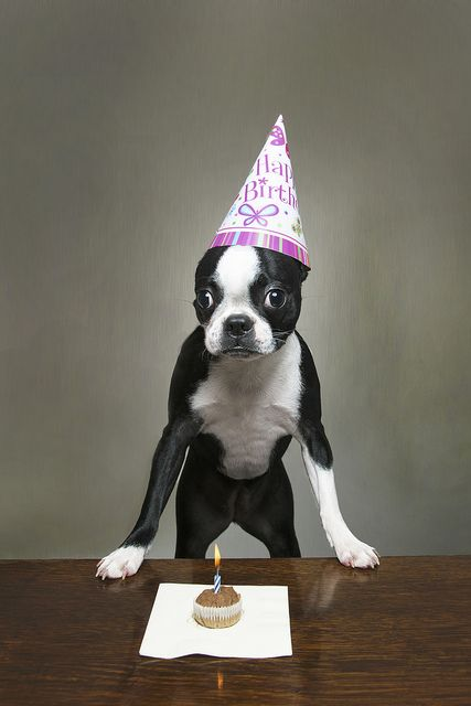 1000 Ideas About Happy Birthday Dog On Pinterest Happy