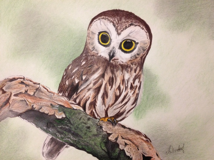Owl on branch by Sarah Wendorf