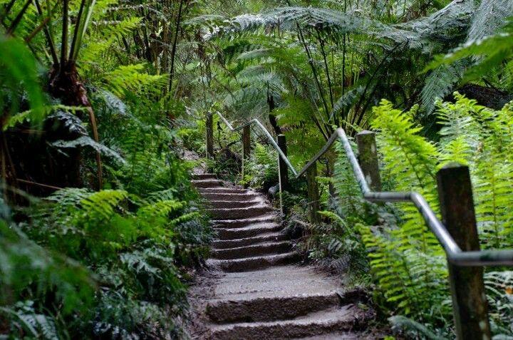1000 Steps / Kakoda Track Memorial Walk :: Dandenong Ranges, Victoria, Australia