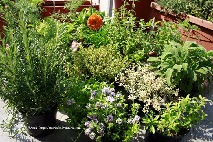 30 best orto in balcone images on Pinterest | Garden decorations ...