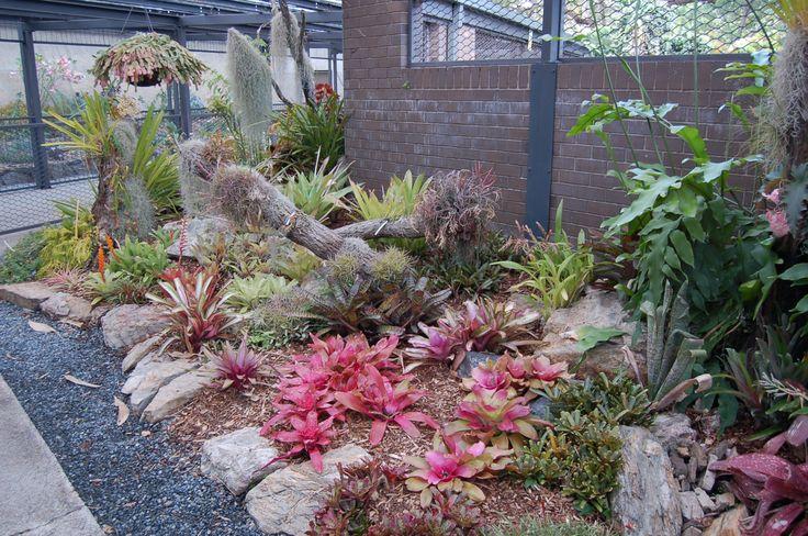 Cactus Garden | Cactus plants in the cactus gardens at Mt. Coot-tha.