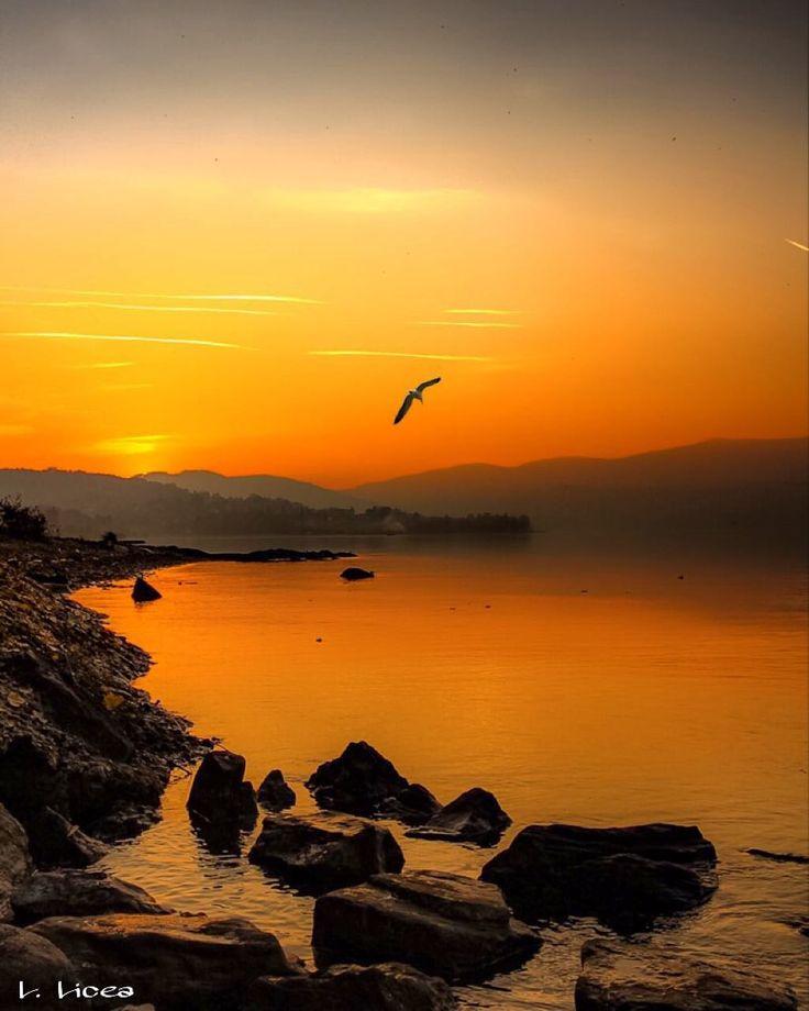 Arriva la brezza senza avviso previo. Arriva come arriva  il colore col tramonto con parole semplici  come l'eco  di un arcobaleno nei tuoi occhi. Arriva la brezza  come un ti voglio lieve e il ricordo vola.  L. Licea ________________________  Llega la brisa  sin aviso previo. Llega como llega  el color con el ocaso con palabras simples como el eco de un arco iris en tus ojos. Llega la brisa con un te quiero leve y el recuerdo vuela.  L. Licea  ________________________  Comes the breeze…