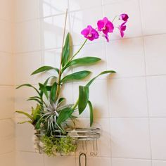 bit of romance to your boring shower? All you need is a hanging shower caddy, a plastic loofah, orchid bark and a few other epiphytic 'air' plants to turn a well-lit bathroom into a tropical spa getaway. Here's how to make your own!