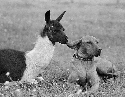 Ear Nibble, 1967: