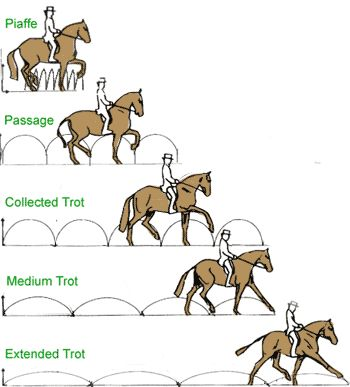 Once you get past the working gaits, here's a good schematic of the various types of trot.  Spanish trot is missing as well, as it is not allowed in competitive dressage.