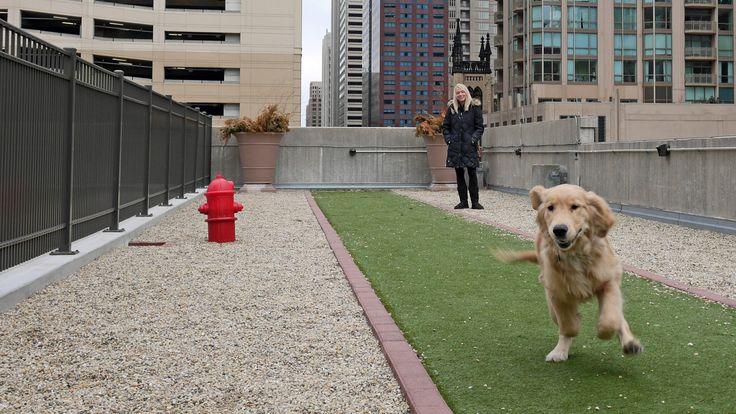 50 best dog wash pet spa images on pinterest dog spa pet store condo dog run solutioingenieria Gallery