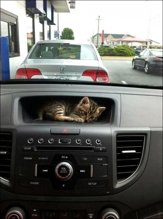 Awe Cat seat
