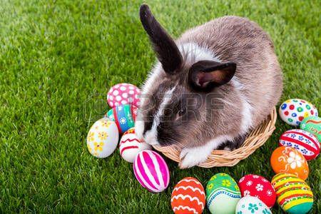 Nyúl és a húsvéti tojás, zöld fű photo