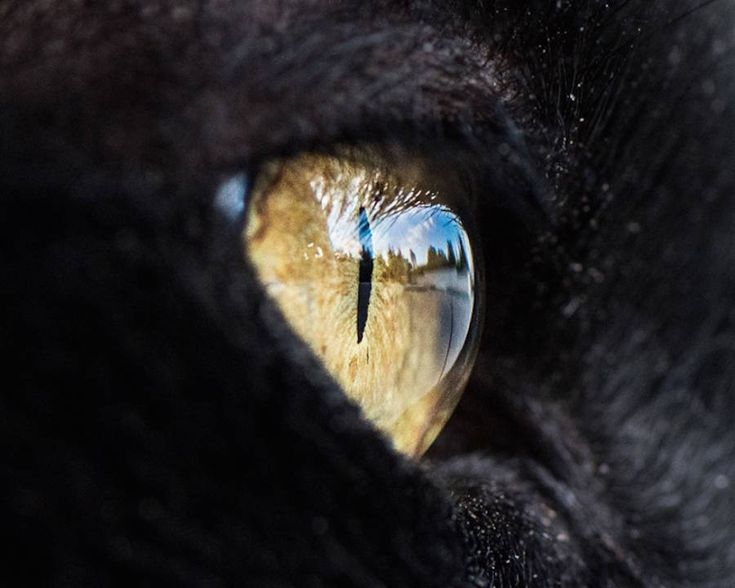Cats Eyes Macro Photography by American photographer Andrew Marttila